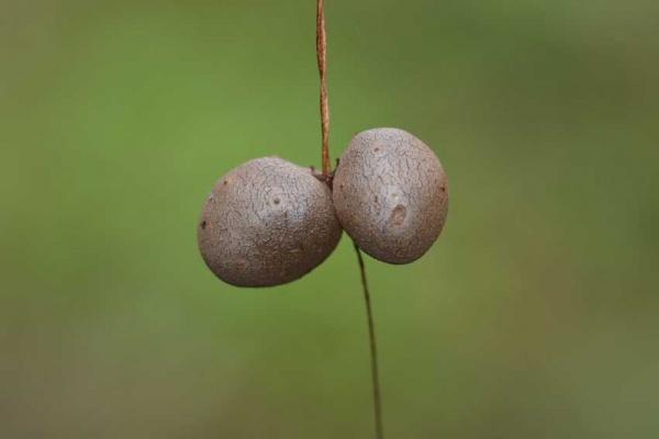植物850